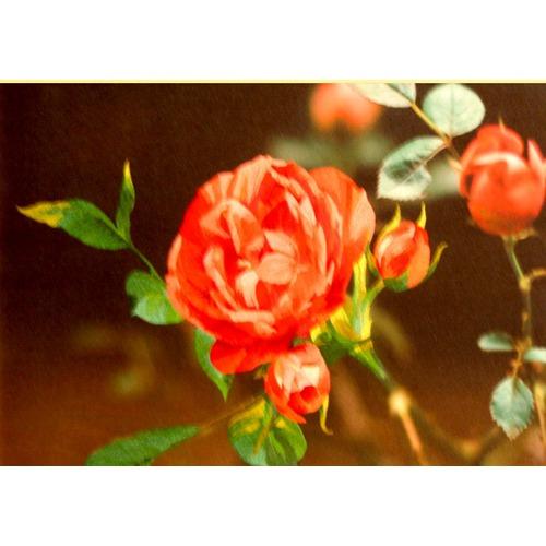 """Набор для вышивания гладью Рисуем иглой """"Розовые мечты"""" (фото, вид 1)"""