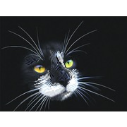 """Ткань с рисунком для вышивки бисером Матрёнин посад """"Черный кот"""""""