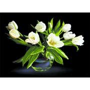 """Ткань с рисунком для вышивки бисером Матрёнин посад """"Белые тюльпаны"""""""