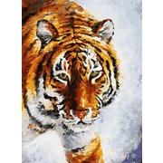 """Набор для раскрашивания Белоснежка """"Тигр на снегу"""""""
