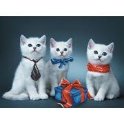 """Набор для вышивания бисером Матрёнин посад """"Нарядные котята"""""""