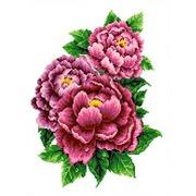 """Канва/ткань с нанесенным рисунком Каролинка """"Розовые пионы"""""""