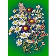 Ткань с рисунком для вышивки лентами Каролинка для вышивки лентами