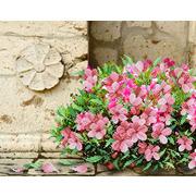 """Ткань с рисунком для вышивки бисером М.П. Студия """"Флоренция в цвету"""""""