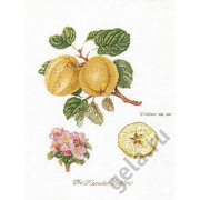 """Набор для вышивания крестом Thea Gouverneur """"Ветка яблони"""""""