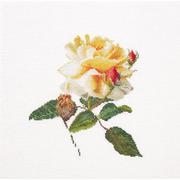 """Набор для вышивания крестом Thea Gouverneur """"Цветение белой розы"""""""