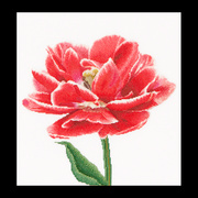 """Набор для вышивания крестом Thea Gouverneur """"Ранний, красно-белый тюльпан"""""""