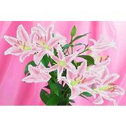 """Ткань с рисунком для вышивки бисером Каролинка """"Розовые лилии"""""""