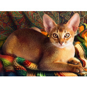 """Набор для выкладывания мозаики Алмазная живопись """"Абиссинский кот"""""""
