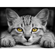 """Набор для выкладывания мозаики Алмазная живопись """"Желтоглазый котенок"""""""