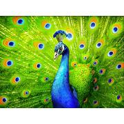 """Набор для выкладывания мозаики Алмазная живопись """"Красавец павлин"""""""