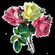 """Набор для вышивания крестом Nitex """"Розы"""""""