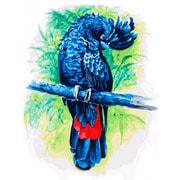 """Набор для раскрашивания Белоснежка """"Синий попугай"""""""
