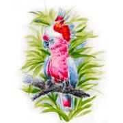 """Набор для раскрашивания Белоснежка """"Розовый попугай"""""""